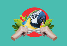 Digital Collage Modern Art. Macaw Head, With Hands Tying Bow
