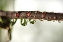 Droplets 2
