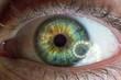 Tęczówka oka zielona