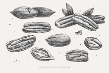 Hand-drawn Pecan Nut. Tropical Fetus, Open And Whole. Organic Food Concept. It Can Be Used As A Decoration Element For Markets, Menus, And Packaging. Vintage Botanical Illustrations.