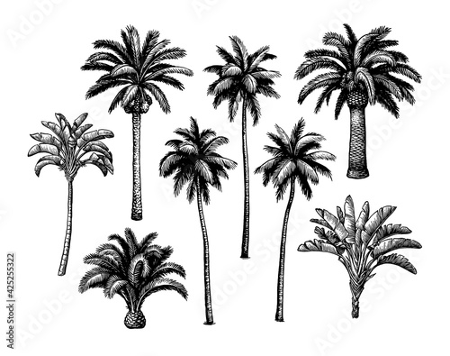 Palm tree set. Wall mural