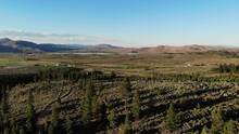 Pan Of North Valleys And Cold Springs Nevada - Toiyabe Forest Aerial Drone