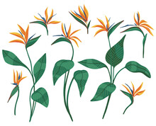 Strelitzia Reginae Tropical Flower Set. Hand Drawn Vector Illustration. Collection Of Exotic Plants. Botanical Cliparts Isolated On White. Bright Elements For Design, Card, Print, Decor, Sticker, Wrap
