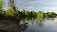 Reflections And Wildlife In Spring. American River California.