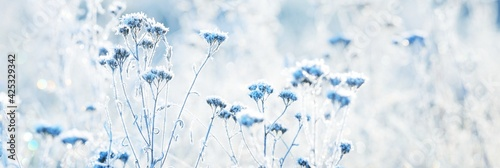 Fototapeta Forest floor of dry plants in a hoarfrost, close-up. Morning fog. Sunny winter day. Seasons, climate change, ecology, botany. Natural blue and white background. Macrophotography, copy space, panorama obraz