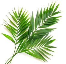 Palm Leaves On White Isolated Background.