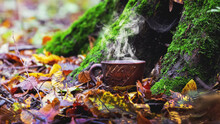 Cup Of Hot Coffee In The Autumn Forest Under A Tree. Rest In The Woods In Autumn