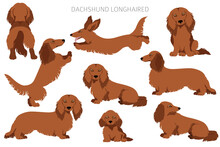 Dachshund Long Haired Clipart. Different Poses, Coat Colors Set