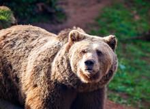 Bear Refuge