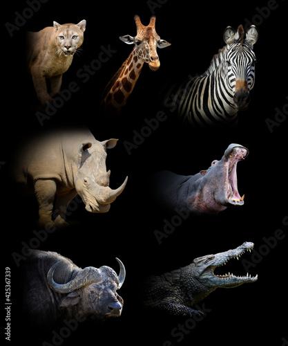 Fotografia Set of seven wildlife animal on black background