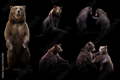 Fotografia Set of many bear. Wildlife animal on black background