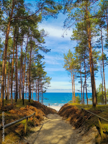 Fototapeta Descent from the forest to the Baltic beaches obraz