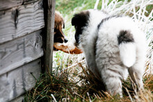 Image Of A Curious Sheppherd Puppy Cub