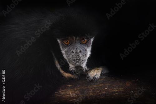 Fototapeta premium portraits of the animals