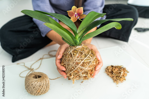 Obraz Kokedama plant DIY woman making orchid japanese air floating ball with sphagnum moss and jute rope. Gardening at home. - fototapety do salonu