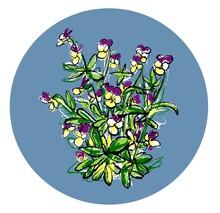 Johnny Jump Up Pansy Flowers, Viola. Vektor, Art.