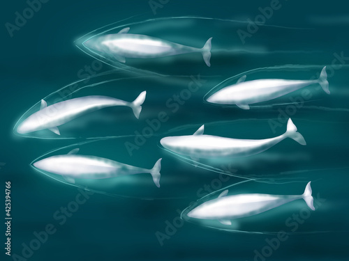 Foto Illustration of swimming belugas in cold sea