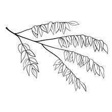 Tree Branch Outline Floral Sketch Isolated Vector