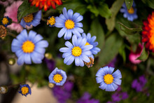 거리에 핀 들꽃 봄의 소식