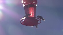 Sun Glare Is Bright In Frame With Multiple Hummingbirds Around Feeder