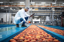 Technologist With Tablet Computer Standing By Water Tank Conveyers Doing Quality Control Of Apple Fruit Production In Food Processing Plant.