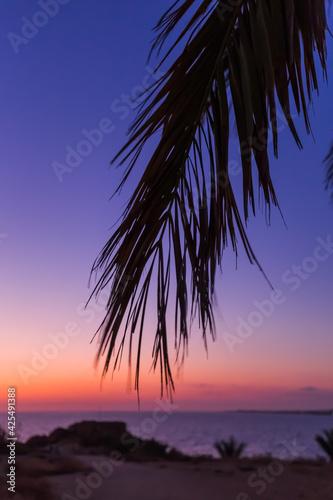 Palm on Cyprus island at sunset