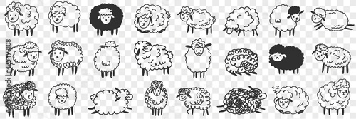 Fototapeta premium Funny white and black sheep animals doodle set. Collection of hand drawn various funny cute fluffy sheets in farms in different poses enjoying life isolated on transparent background