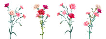 Panoramic View With Carnation. Set Red, Pink, White Flowers, Green Leaves On White Background, Collection For Mother's Day, Victory Day, Digital Draw, Vintage Illustration, Vector, Watercolor Style