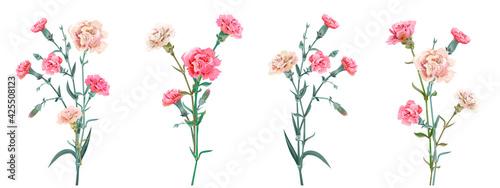 Fotografia, Obraz Panoramic view with carnation