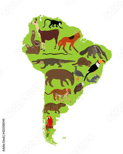 Fototapeta premium Continent map Southern America vector illustration with wild animals. Travel destination for tourist. Wildlife exotic attraction jaguar, chinchilla, cayman, capybara, lama, anteater, macaw parrot.