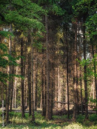 Springtime in the Rottbachtal forest in Muelheim an der Ruhr, North Rhine-Westphalia, Germany