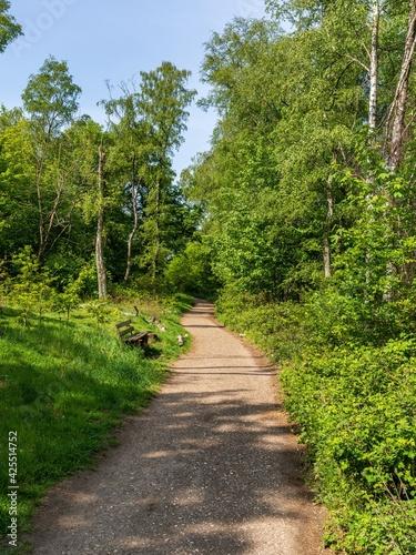 A footpath and a bench in the Wambachtal forest in Muelheim an der Ruhr, North Rhine-Westphalia, Germany
