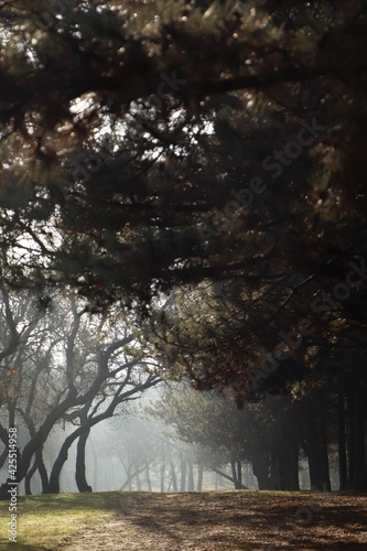Picturesque view of beautiful forest on sunny day
