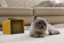 Adorable Birman Cat On Floor Near Modern Electric Heater Indoors