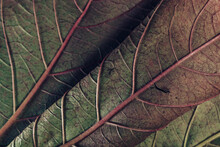 Beautiful Leaf Teture Pattern Background For Design. Macro Photography View.