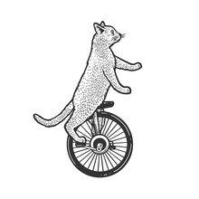 Unicycle Cat Sketch Raster Illustration