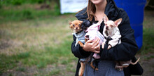 Three Chihuahuas In Clothes. Warm Overalls For Dogs. Hold A Small Dog In Your Arms. Walk With The Hostess. Place For Your Text