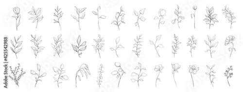 Photo Set of botanical line art floral leaves, plants