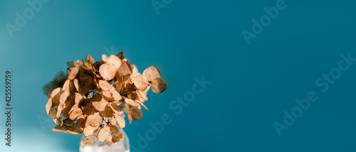 Obraz na plátně Small bouquet of dried hydrangea flowers on a blue background in bright natural