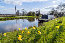 Daffodils By The Leeds Liverpool Canal