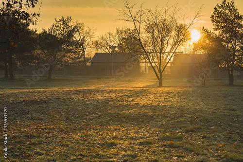 Fototapeta Drzewo w promieniach wschodzącego słońca. obraz