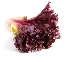 Red Coral Salad Isolated On The White Background