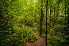 Chimney Rock Trail. North Carolina