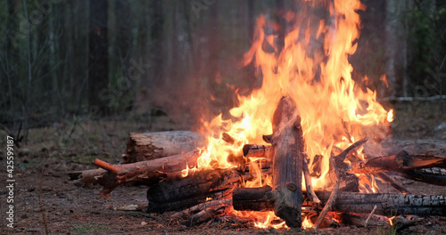 Fotografia, Obraz Large burning fire in the forest in cloudy weather