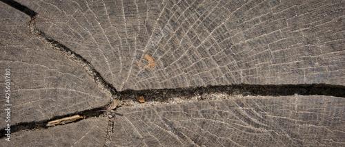 Fototapeta Przekrój pnia drzewa, abstrakcja, tekstura. obraz