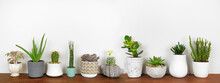 Group Of Assorted Unique Potted Houseplants In A Row. Side View On Wood Shelf Against A White Wall.