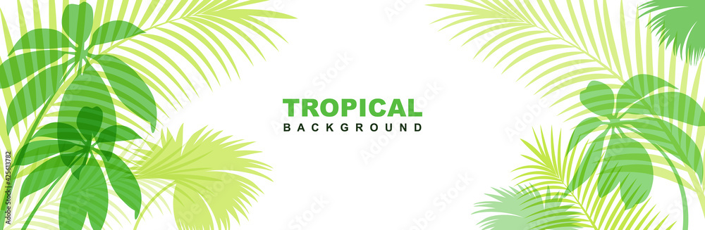 Fototapeta Tropical horizontal banner with exotic green leaves. Stylish fashion frame on a white background.  Vector illustration isolated and editable.