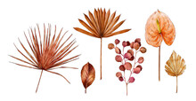 Watercolor Tropical Clipart With Palm Leaves, Anthurium Flower, Eucalyptus. Exotic Set Of Dry Flora. Hand Painted Watercolor. Botanical Hand Drawn Illustration For Wedding Invitations, Prints