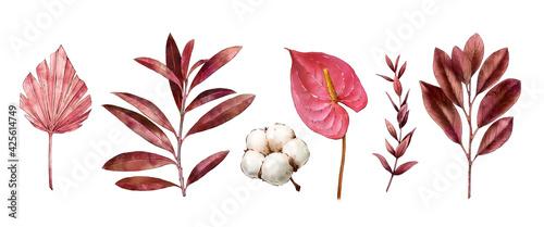 Fotografie, Obraz Watercolor tropical clipart with leaves, anthurium flower, dry flora, cotton
