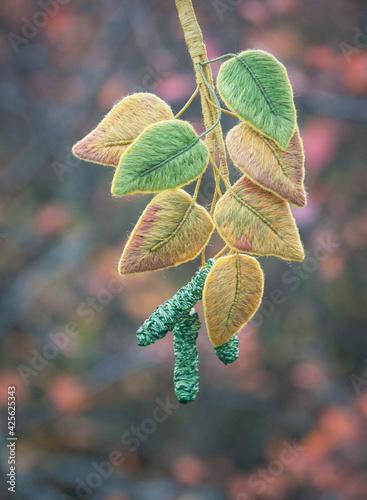 embroidered brooch - birch branch in nature Fotobehang